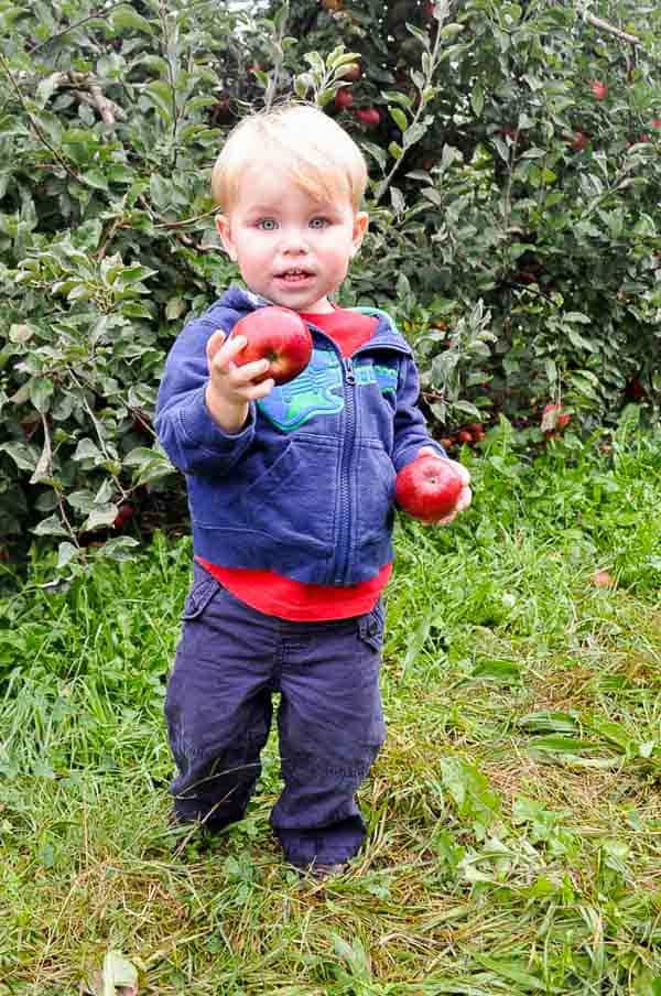kids apple picking-1-2